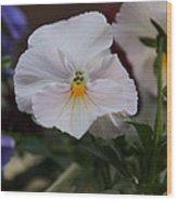 Viola Tricolor Heartsease Wood Print