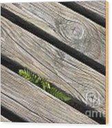 130201p005 Wood Print