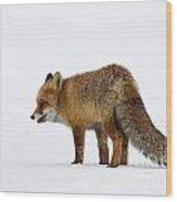 130201p056 Wood Print