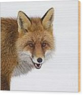 130201p058 Wood Print