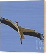 130201p265 Wood Print