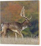 130201p289 Wood Print