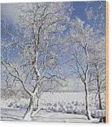 130201p335 Wood Print