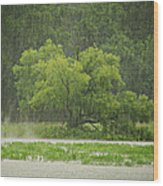 1307-4983 Rainy Lake Ludwig Wood Print by Randy Forrester