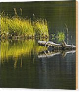 131005b-029 Forest Pond 2 Wood Print