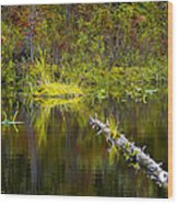 131005b-052 Forest Marsh 2 Wood Print
