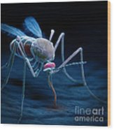 Anopheles Mosquito Wood Print