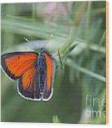 14 Balkan Copper Butterfly Wood Print