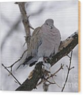 Eurasian Collard Dove Wood Print