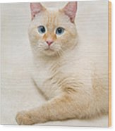 Flame Point Siamese Cat Wood Print