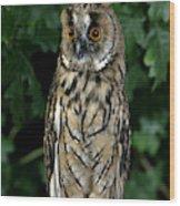 Hibou Moyen Duc Asio Otus Wood Print