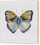 14 Pieridae Butterfly Wood Print