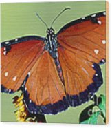 Queen Butterfly Wood Print
