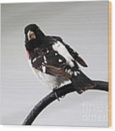 Rose Breasted Grosbeak Wood Print