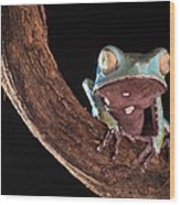 Tree Frog Wood Print by Dirk Ercken
