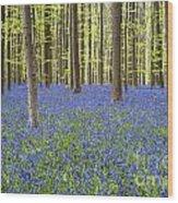 140420p006 Wood Print