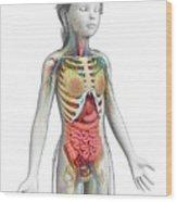 Human Anatomy Wood Print