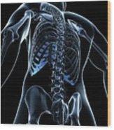 Male Skeleton Wood Print