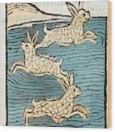 1491 Sea Hares From Hortus Sanitatis Wood Print