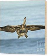 Brown Pelican Wood Print