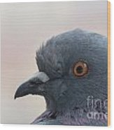 Rock Dove Wood Print