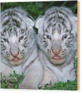 Tigre Blanc Panthera Tigris Wood Print