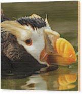 Usa, Oregon, Newport, Oregon Coast Wood Print