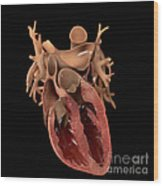Heart Anatomy Wood Print