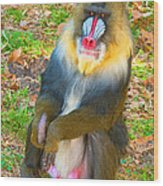 Mandrill Wood Print