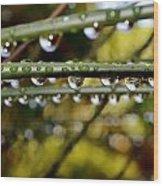 Raindrops On Bamboo Grass Wood Print