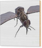 Tsetse Fly Wood Print