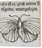 1683 Maria Merian Black Veined White Wood Print