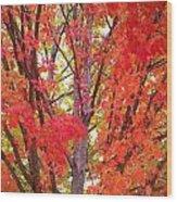 Autumn Color Wood Print