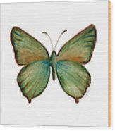 17 Green Hairstreak Butterfly Wood Print