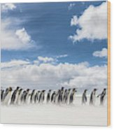 King Penguin (aptenodytes Patagonicus Wood Print