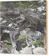 17 Mile Drive Tree Wood Print