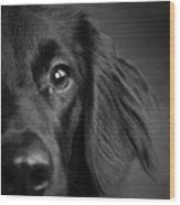 Portrait Of A Mixed Dog Wood Print