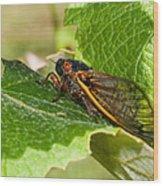 17 Year Cicada 2 Wood Print