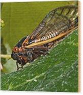 17 Year Cicada 3 Wood Print by Lara Ellis