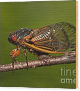 17-year Periodical Cicada I Wood Print