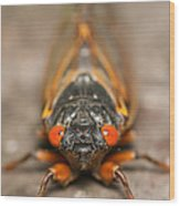 17-year Periodical Cicada IIi Wood Print