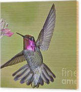 Annas Hummingbird Wood Print