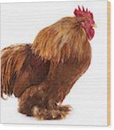 Coq Brahma Wood Print