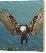 Nature And Wildlife Wood Print