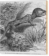 1892 Art Print Engraving Animal Big-headed Turtle By G Muetzel Wood Print