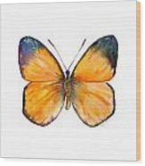 19 Delias Anuna Butterfly Wood Print