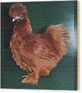 19. Red Silkie Hen Wood Print
