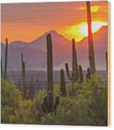 Usa, Arizona, Saguaro National Park Wood Print