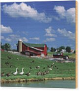 1990s Amish Family Farm Bunker Hill Wood Print