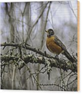 1st Robin Of Spring Wood Print